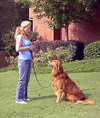 Dog_obedience